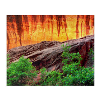 Escalante Neon Canyon and Foliage | Utah Acrylic Print