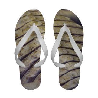 escalas de la parte posterior del cocodrilo del al sandalias