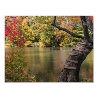Escalera del árbol sobre la charca fotografía