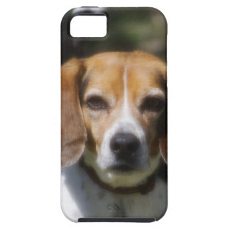 Escalera del beagle funda para iPhone SE/5/5s