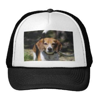 Escalera del beagle gorras de camionero