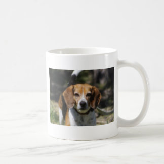 Escalera del beagle taza de café