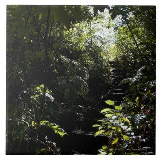 Escalera/sendero rústicos en el bosque, luz del so azulejo
