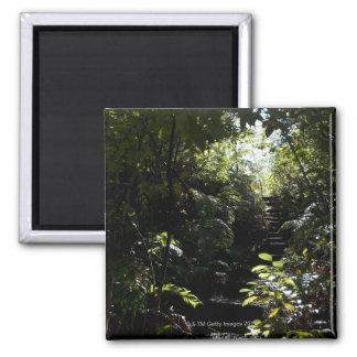Escalera/sendero rústicos en el bosque, luz del so imán cuadrado