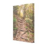Escaleras en el bosque lona envuelta para galerias