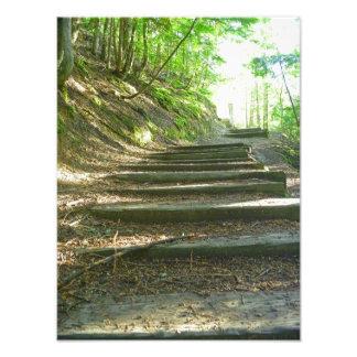 Escaleras hasta el bosque cojinete
