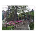 Escaleras que llevan hacia el edificio biomédico e postal