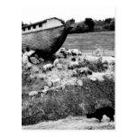 Escape de la arca tarjetas postales