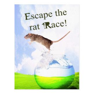 Escape The Rat Race! Postcard
