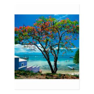 Escape tropical Bahamas de la isla tropical Postales