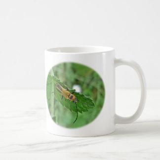 Escarabajo amarillo oscuro del soldado taza