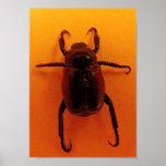 Escarabajo anaranjado impresiones