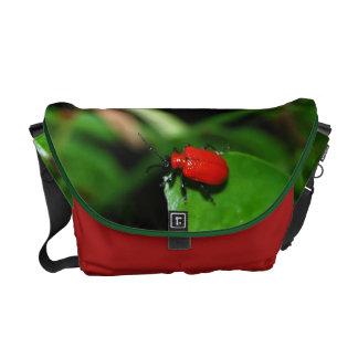 Escarabajo color rojo alegre en la hoja verde bolsas de mensajeria