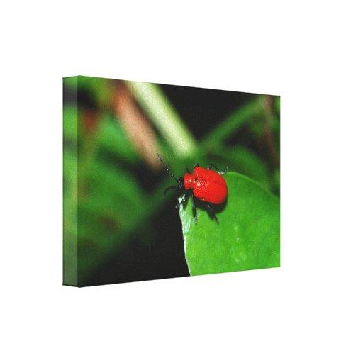 Escarabajo color rojo alegre en la hoja verde impresiones en lienzo estiradas