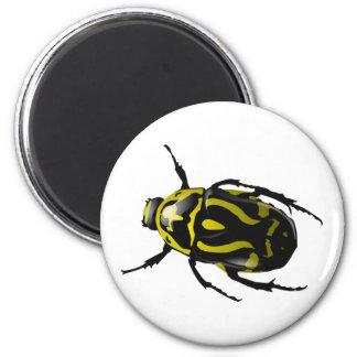 Escarabajo coloreado Insecto-Salvaje conseguido Imán Redondo 5 Cm