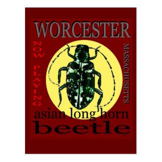 Escarabajo de cuernos largo de Worcester Postales