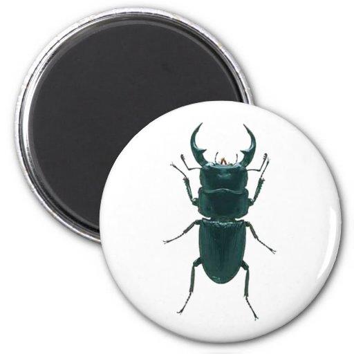 Escarabajo de estiércol negro grande imán redondo 5 cm