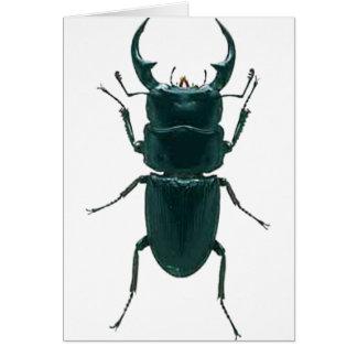 Escarabajo de estiércol negro grande tarjeta de felicitación