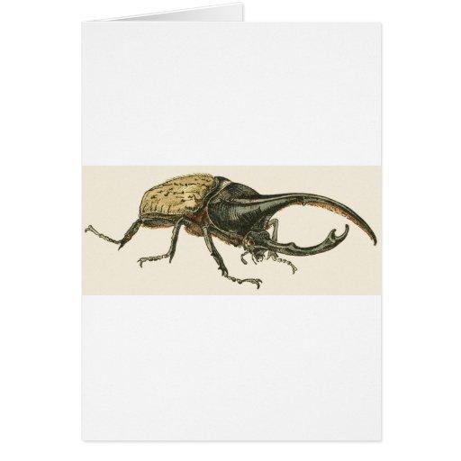 Escarabajo de Hércules Tarjeta De Felicitación