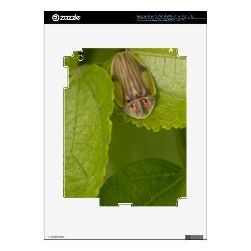 Escarabajo de la concha, bosque de la nube, Costa  iPad 3 Skins