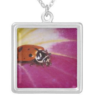 Escarabajo de la mariquita. (Convergens del Colgante Cuadrado