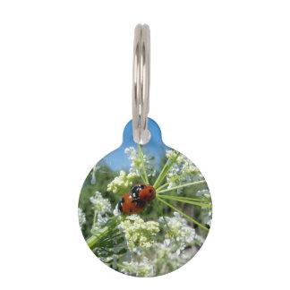 escarabajo de la suerte placas de mascota