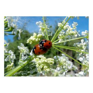 escarabajo de la suerte tarjetas de visita grandes