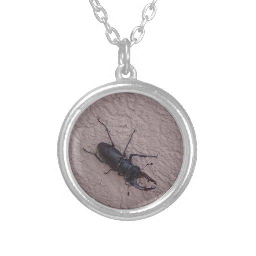 escarabajo de macho colgante redondo