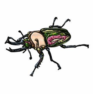 Escarabajo de macho del arco iris escultura fotografica