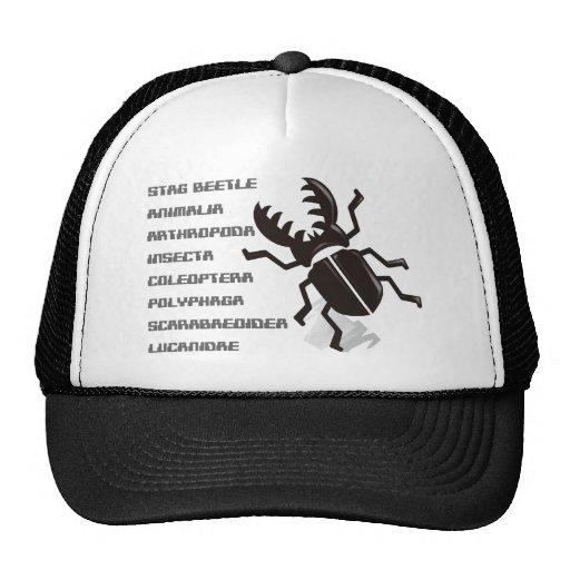 Escarabajo de macho gorra