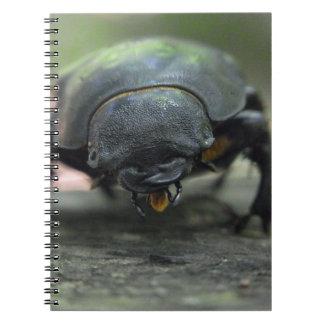 Escarabajo de macho cuaderno