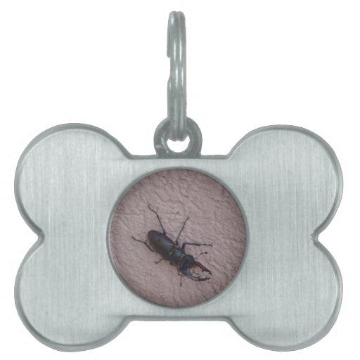 escarabajo de macho placa mascota