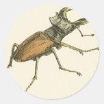 Escarabajo de macho pegatinas redondas