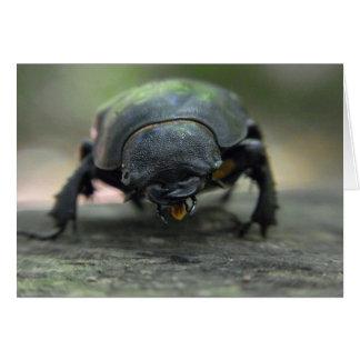 Escarabajo de macho tarjeta pequeña