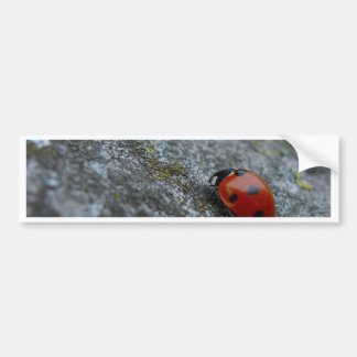 escarabajo de señora 7-Spot Pegatina Para Auto