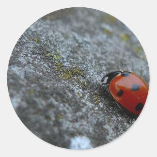 escarabajo de señora 7-Spot Pegatinas Redondas