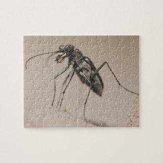 Escarabajo de tigre, ocellata de Cicindela, adulto Rompecabeza