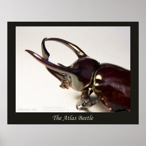 Escarabajo del atlas impresiones