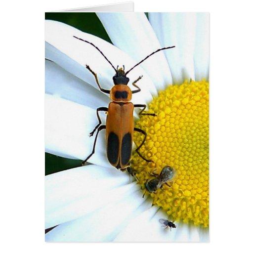 Escarabajo del Cuero-ala de Pennsylvania Felicitaciones