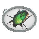 Escarabajo del escarabajo hebillas de cinturon