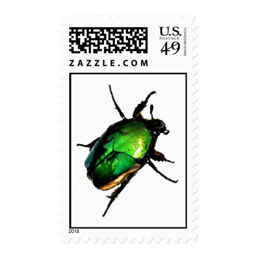 Escarabajo del escarabajo sello