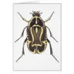 Escarabajo del escarabajo tarjetas