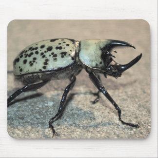 Escarabajo del este masculino Mousepad de Hércules