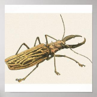 Escarabajo del fonolocalizador de bocinas grandes póster