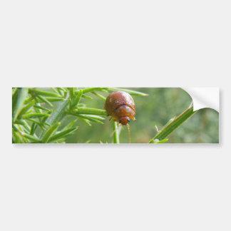 Escarabajo del Gorse Pegatina Para Auto