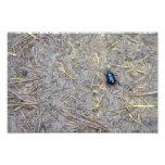 Escarabajo Impresiones Fotográficas