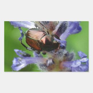 Escarabajo japonés en la flor púrpura de la punta