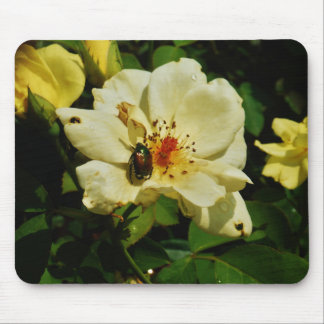 Escarabajo japonés verde en el rosa amarillo flora