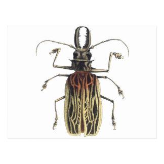Escarabajo Largo-De cuernos, Prionus Cervicornis Postal