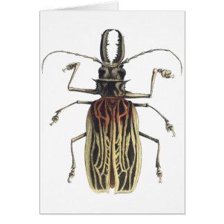 Escarabajo Largo-De cuernos, Prionus Cervicornis Tarjeta De Felicitación
